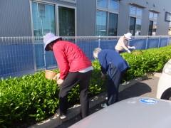 かりんの花敷地内で茶摘み